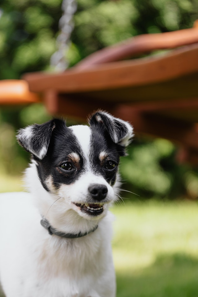 Best Dog Toothpaste for Gum Disease
