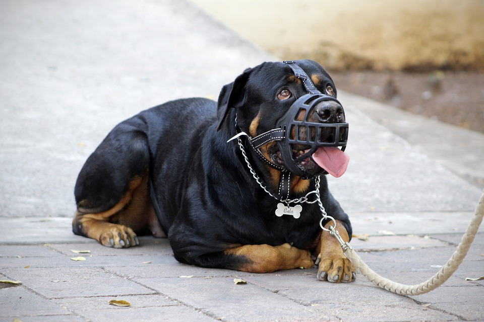 Best Muzzle to Stop Dog Barking at Night